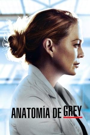 Grey's Anatomy, Season 14 poster 1