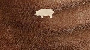 Pig image 5