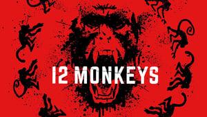 12 Monkeys image 4